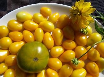 Насіння томату Медова крапля - один з найпопулярніших сортів