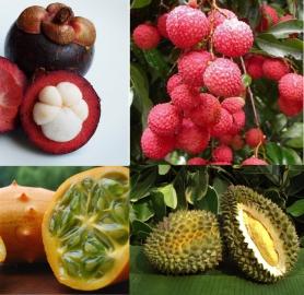 Поставка екзотичних фруктів зі всього світу. Ціни конкуренті в Україні