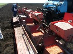 Экономный посев кукурузы. Интересует?