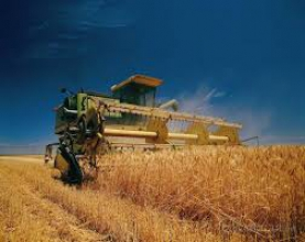 Сбор урожая пшеницы по приемлемой цене