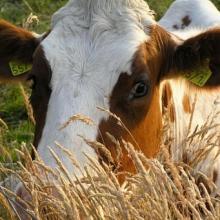 Ветеринарні препарати: купити у виробника