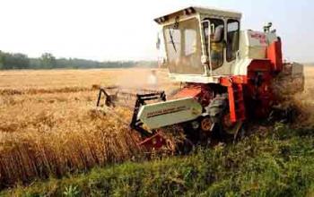 Поможем вам собрать урожай пшеницы. Обращайтесь!