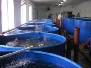 В продажу обладнання для вирощування риби на УЗВ