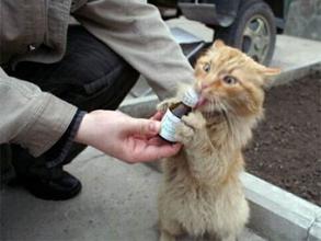 Ветеринарные препараты для кошек по доступным ценам