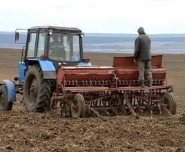 Выполняем посев кормовой свеклы своей техникой