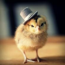 Премикс для цыплят