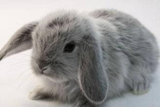 Найкращий премікс для кроликів. Купуйте!