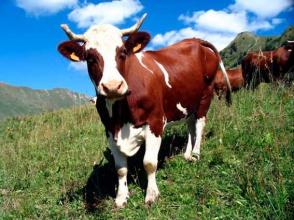 Ветеринарные препараты: Украина, покупай здесь!