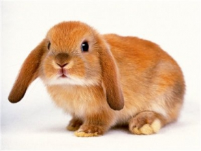 Якісні премікси для кроликів можна купити тут