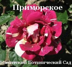 Декоративні рослини: хвойні, листяні дерева, чагарники, квіти - Дослідне господарство Приморське