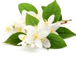 Натуральна українська косметика, активатор росту для волосся, органічний крем - Natura Butter