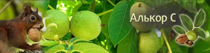 Купити саджанці горіха, кращі сорти грецького горіха, саджанці горіха Україна - Алькор С