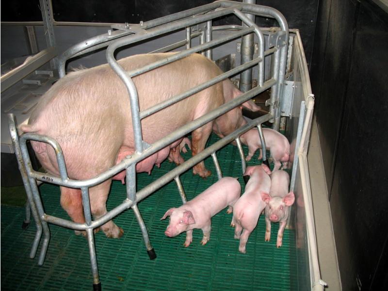 Как сделать пол для свиней своими руками 24
