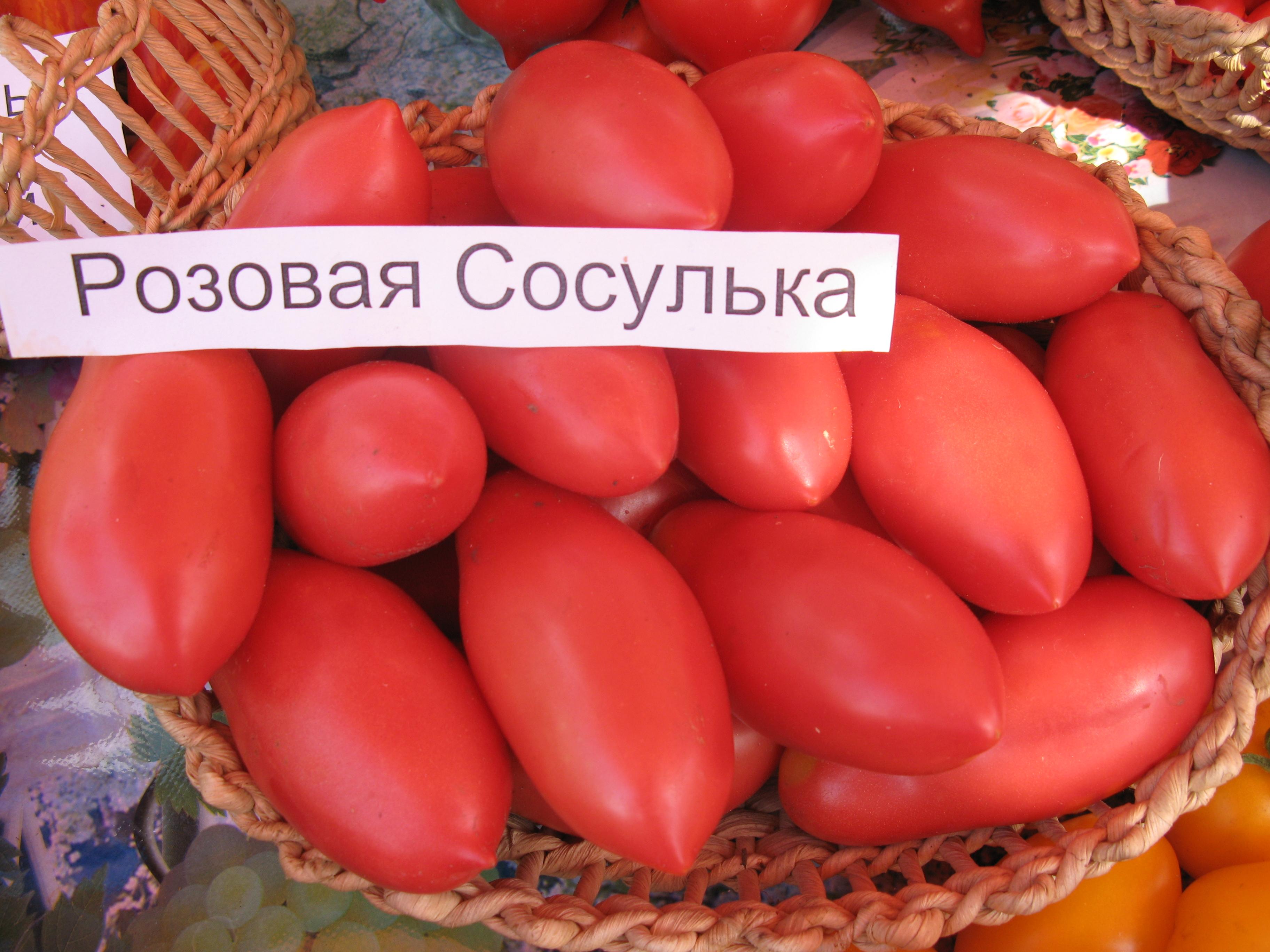 томат сосулька розовая отзывы фото