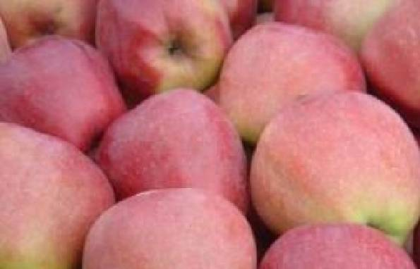 Купить яблоки Глостер оптом по доступной цене