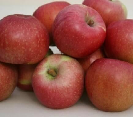 Оптовий продаж яблук в Україні (Вінниця)