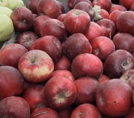 Продажа яблок в Винницкой области (опт)