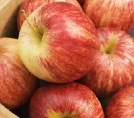 Купить яблоки оптом (Винницкая область)