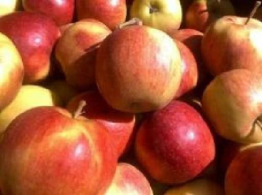 Купити яблука Лігол оптом в Україні