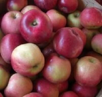 В продаже зимние яблоки оптом