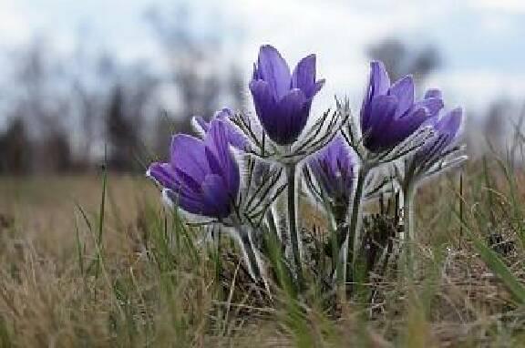 Саженцы декоративных кустарников и других видов растений недорого