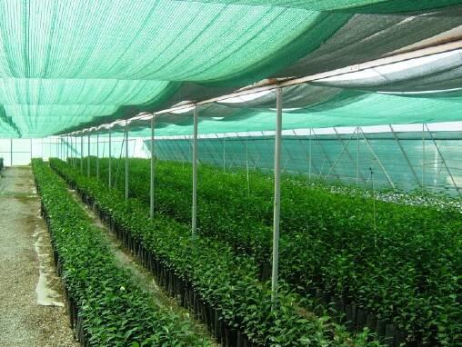 Затіняюча сітка для теплиць та городів у продажу
