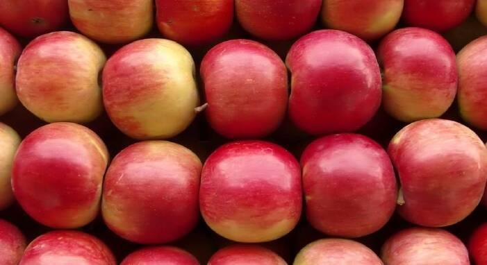 Купити зимові сорти яблук ціна найкраща
