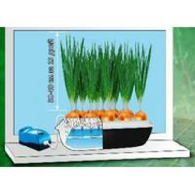Установка для вирощування зеленої цибулі недорого і практично ... 5f3ab1e23c4a6