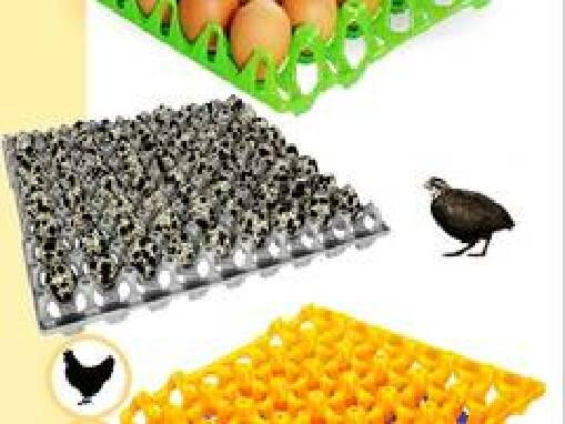 Лотки для перепелиних яєць купити Україна