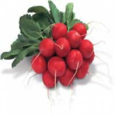 Профессиональные семена овощей приобрести по доступной цене