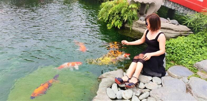 garden pond with fish