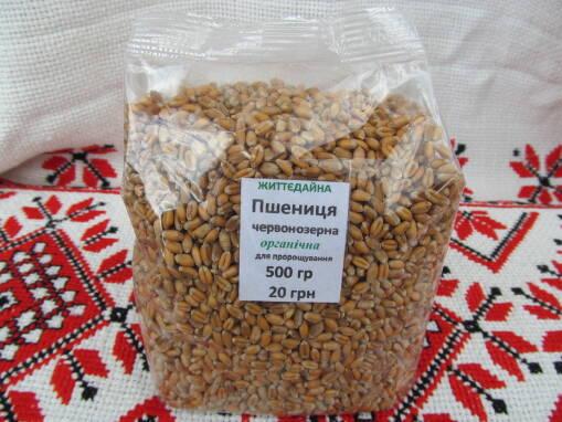 Цельнозерновые крупы: экологически чистое зерно для проращивания в домашних условиях