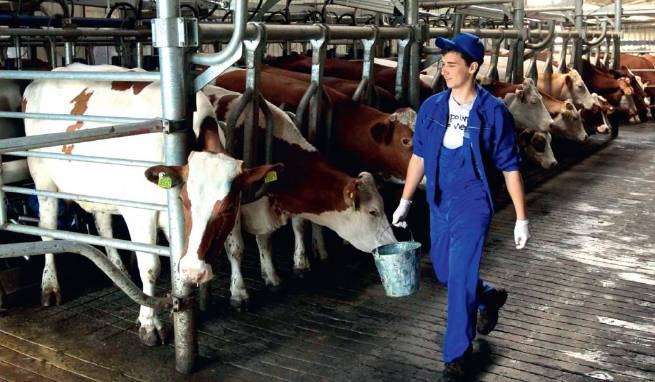 Работа в Германии на ферме для украинцев