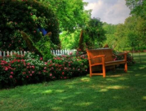 Купити тіньовитривалу газонну траву можна тут