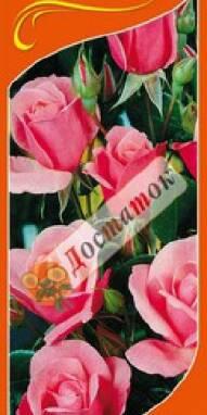 Саженцы роз Кинг Артур, Белая Сенсация по доступным ценам