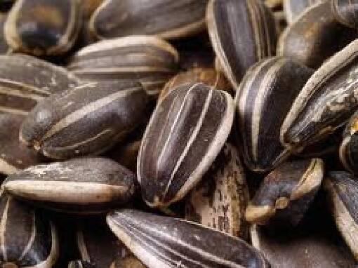 Каліброване смажене насіння. Поспішайте купити тут!