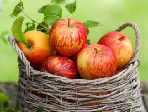 Яблука оптом - продаж по Україні. Відбірні сорти!
