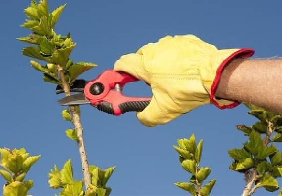 Санитарная обрезка деревьев. Доверьте это дело профессионалам
