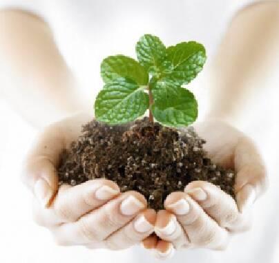 Продаем пестициды для защиты растений (оптом и в розницу). Гарантированный результат!