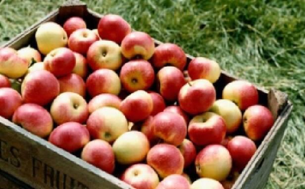Продажа яблок в Украине. Лучшие сорта!
