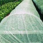 Агроволокно белое - лучшее предложение для огородников