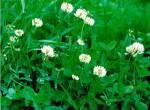 Предлагаем купить газонную траву в ассортименте
