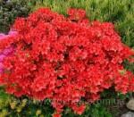 Унікальні декоративні рослини: величезний вибір!