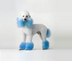 Креативний грумінг собак за невисокими цінами