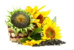 Купити посівний матеріал соняшника дешево