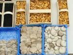 Покупка грибов оптомнедорого: доступные цены на всю продукцию!
