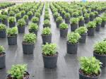 Агротекстиль купити Україна