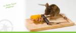"""Послуги дератизації харчових приміщень пропонує ПП """"Крес""""."""
