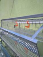 Клетка для перепелов купить на 200 птиц!