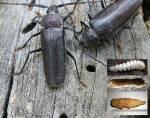 Здійснюємо боротьбу з шкідниками деревини швидко та якісно!